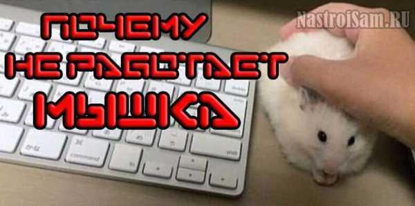 pochemu_ne_rabotaet_besprovodnaya_myshka_na_noutbuke_windows_10_1.jpg